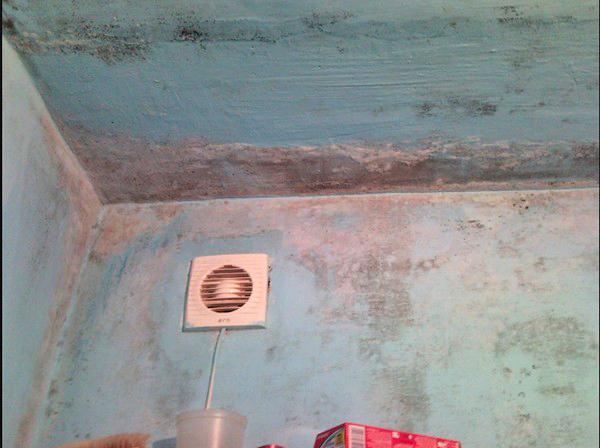 плесень в ванной комнате как вывести